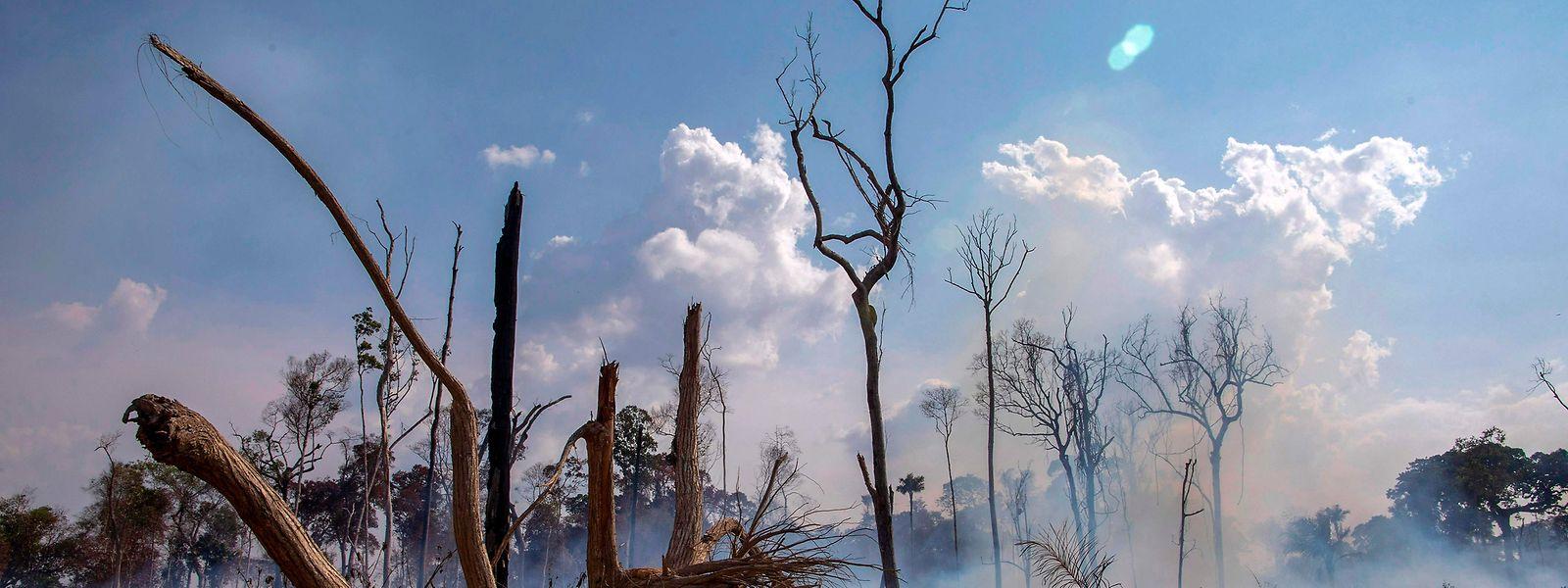 In Brasilien wüten die schwersten Waldbrände seit Jahren.