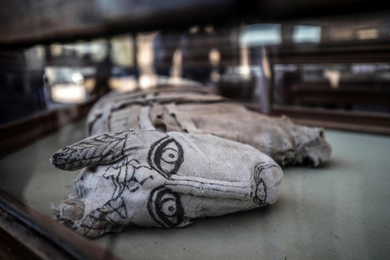 Die Forscher entdeckten fünf Mumien von Löwenbabys, daneben zahlreiche mumifizierte Katzen, Kobras, Krokodile und Skarabäen.