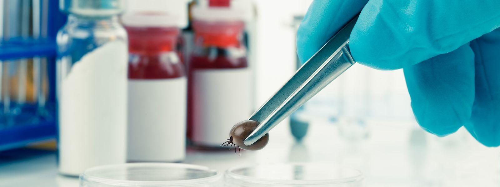 Le Luxembourg Institute of Health (ex-CRP Santé) travaille au développement de tests plus efficaces et à la création d'un vaccin contre les tiques