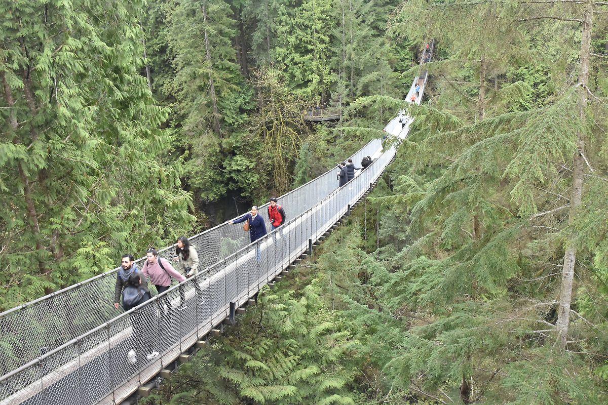 70 mètres au-dessus d'un canyon: Le pont suspendu de Capilano.