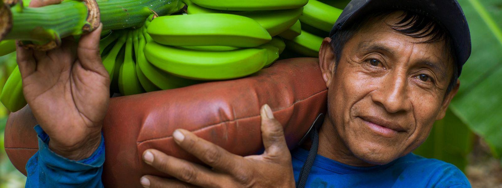 Mittlerweile komme jede vierte Banane in Luxemburg aus fairem Handel.