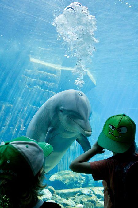 Delfinarien sind ein Zuschauermagent. Eine artgerechte Haltung ist in den Becken aber oft aber nicht möglich, weshalb sich Tierschützer dagegen aussprechen.