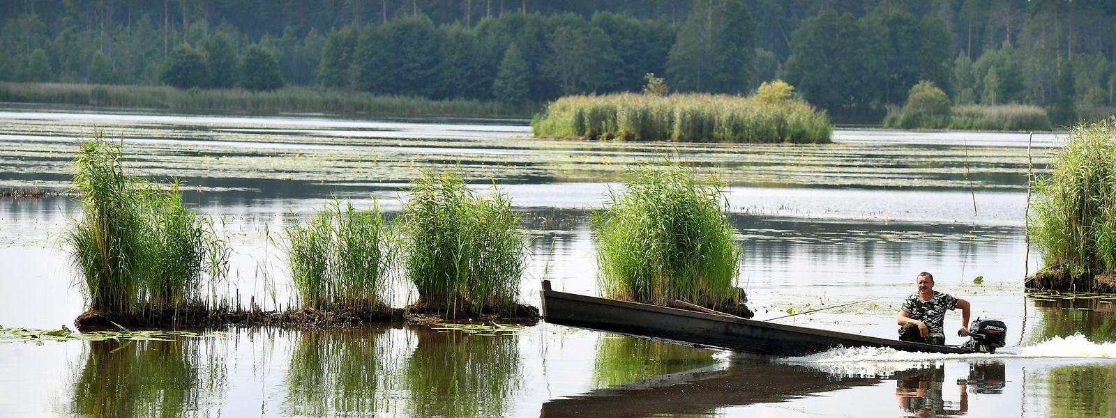 La forêt primaire de Bielowieza en Pologne est classée patrimoine mondial de l'Unesco depuis 1979.