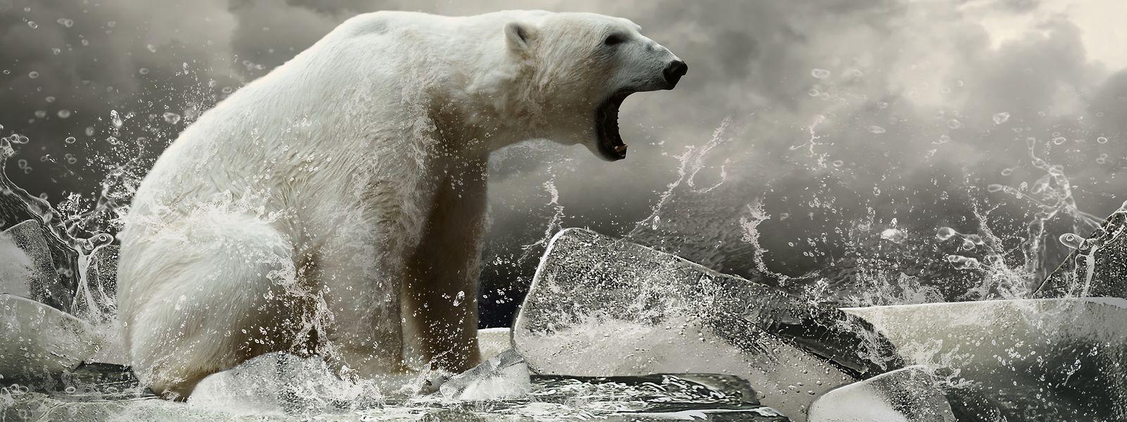 Die Bedrohung der Arktis durch den Klimawandel ist reeller denn je.
