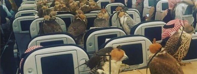 Falken überall: Die Economy Class ist ausgebucht.