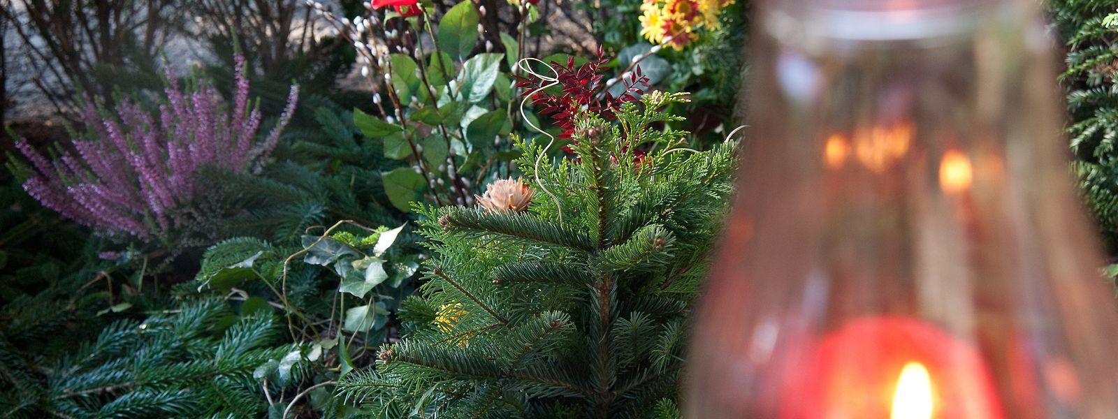 Die Tannenzweige eignen sich auch als Frostschutz und oder Schmuck auf einem Grab.