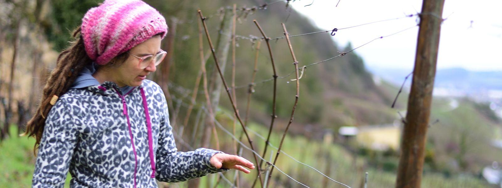 Winzerin Laurence Duhr plant, in ihrem Weinberg Lavendel anzupflanzen.