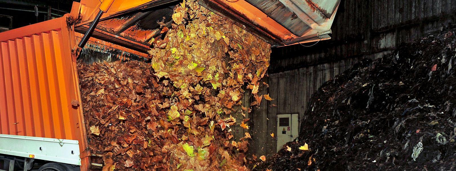 In Esch/Alzette sind derzeit 15 Personen damit beschäftigt, das Baumlaub zu beseitigen.