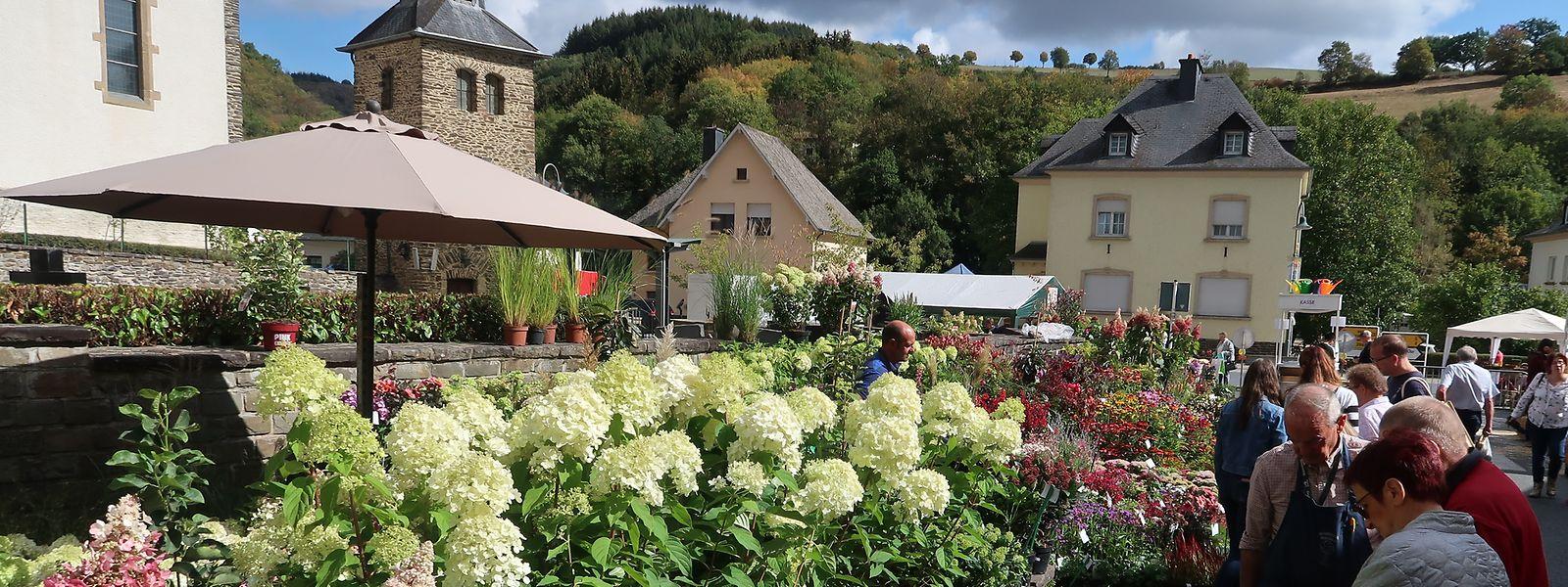 Beim 18. Pflanzen- und Gartenfest in Stolzemburg kamen Gartenfreunde voll auf ihre Kosten.