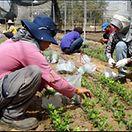 Agência europeia encontra casos de semi-escravatura em Portugal