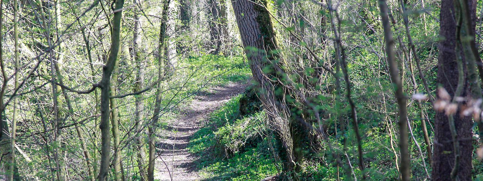 Der Wald ist Erholungsgebiet und Lebensraum zugleich.