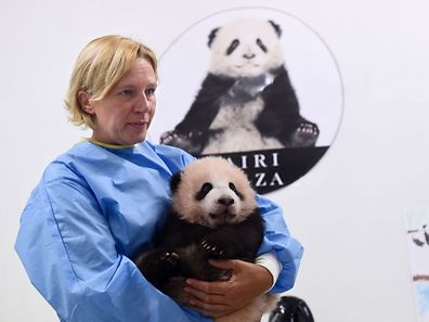 Zookeeper Tania Stroobant holds three-month-old baby panda Tian Bao during a press conference on the name of the animal at the Pairi Daiza animal park, on September 15, 2016