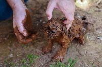 25.01.2019, Brasilien, Brumadinho: Ein Hundewelpe ist mit Schlamm bedeckt nach dem Bruch eines Staudamms an der Feijão Eisenerzmine. Foto: Rodney Costa/dpa +++ dpa-Bildfunk +++