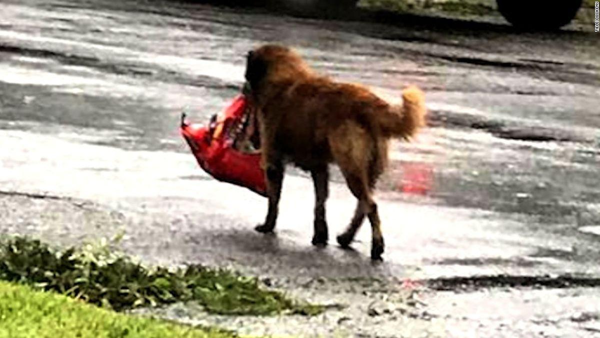 Das Foto eines Hundes, der seine Futtertüte vor den Fluten rettete, verbreitete sich viral im Netz.