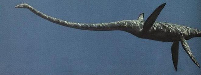 Ce grand reptile marin a disparu en même temps que les dinosaures, à la fin du crétacé.