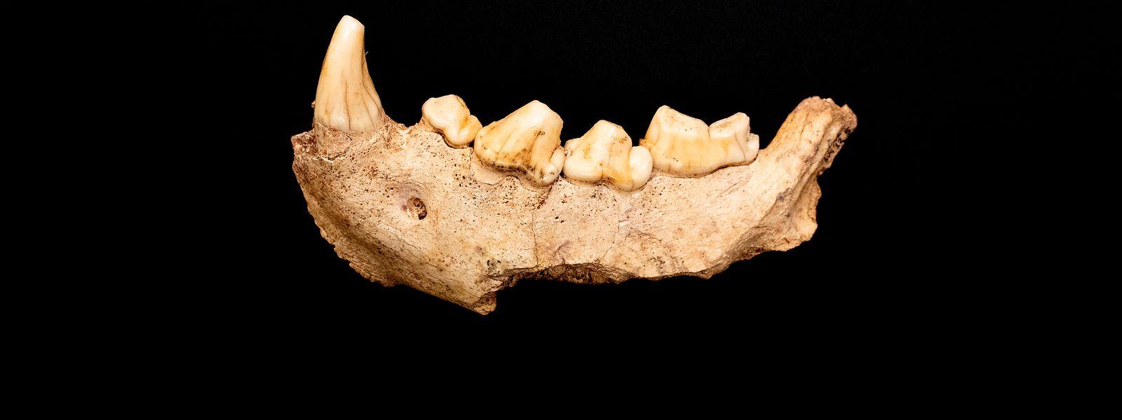 Ein Fund aus der Guattari-Höhle am Circeo-Berg zwischen Rom und Neapel in Italien aus dem Jahr 2020