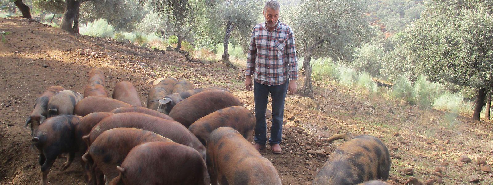 Eduardo Donato kümmert sich fürsorglich um seine Schweine der Rasse Manchado de Jabugo.