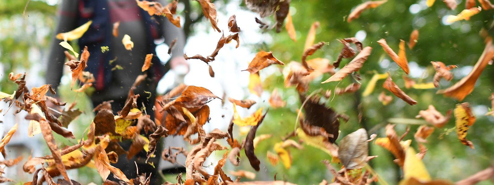 Laubsauger erleichtern zwar die Arbeit, dafür sind sie aber gefährlich für kleine Wildtiere.