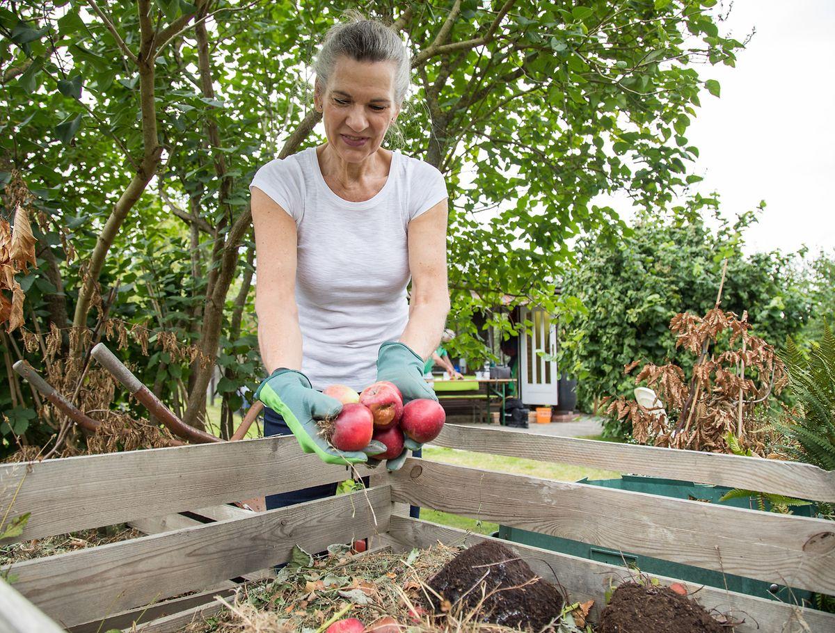 Bei grünen Küchenabfällen sind sich alle Experten einig - sie dürfen auf den Kompost.