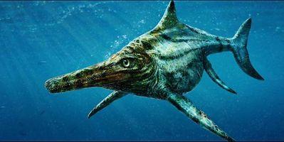 Sketch of an Ichthyosaurus