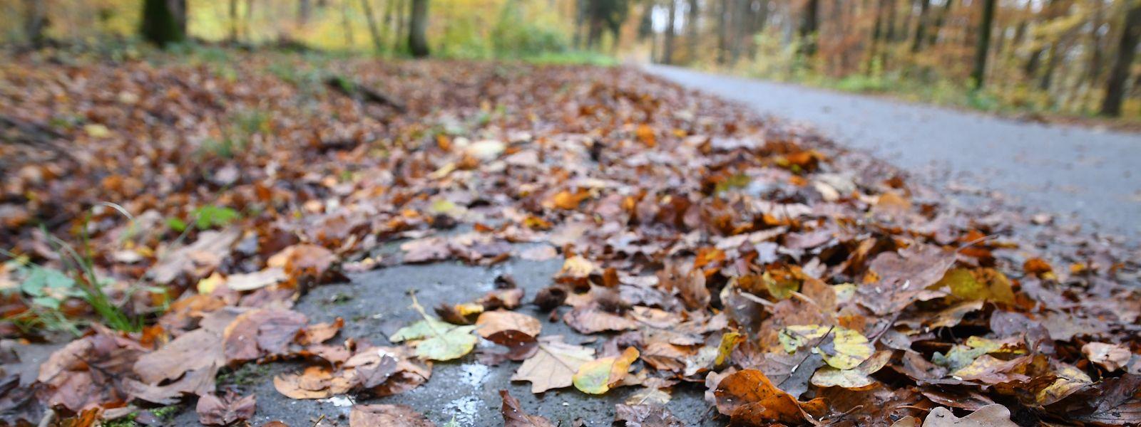 An einem Radweg im Laangebësch bei Leudelingen findet ein Förster heute vor zwei Jahren einen Toten mit Schussverletzung.