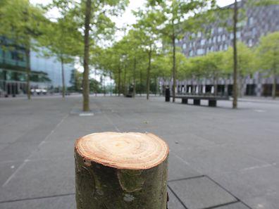 Auf der Place de l'Europe steht seit kurzem ein Baum weniger.