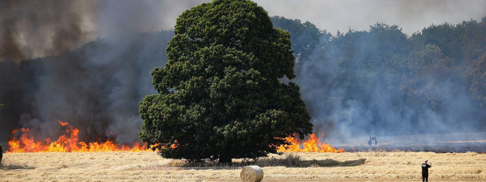 Sommer 2019: Während einer Hitzewelle brach in Hamm ein Feuer aus und griff auf ein anliegendes Waldstück über.