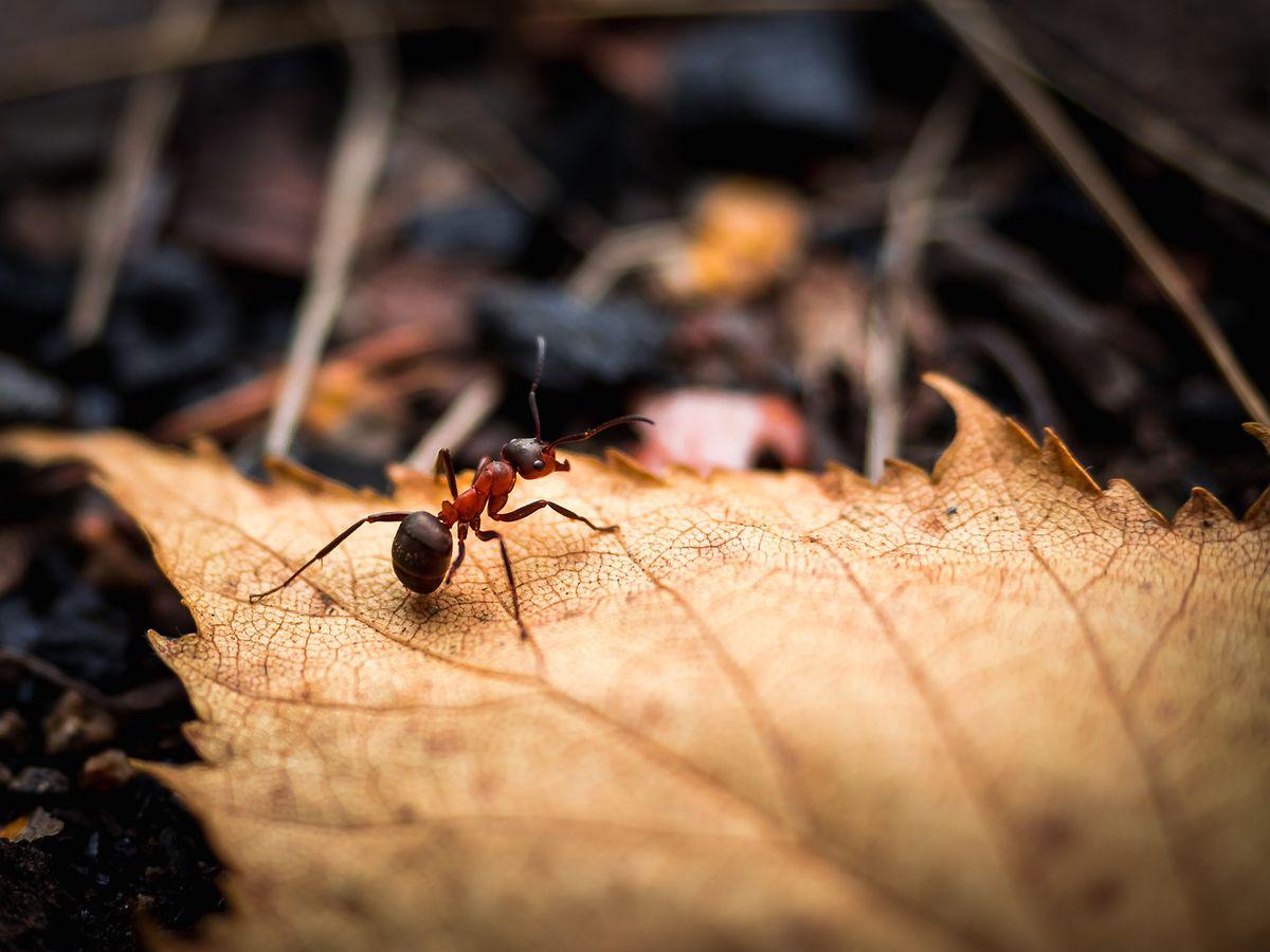 Ameisen lüften gerne mal den ganzen Bau.