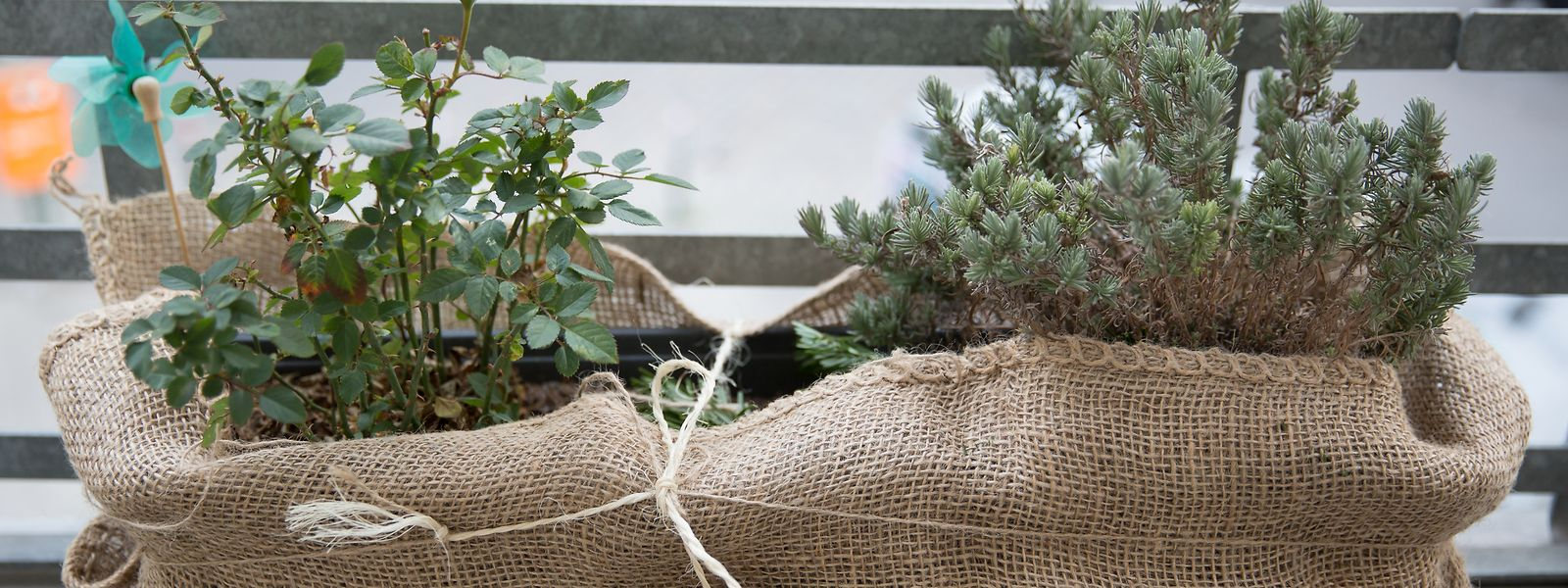 Eingepackt durch denWinter:Viele Pflanzen auf der Terrasse sollten Hobbygärtner in der kalten Jahreszeit nicht sich selbst überlassen.