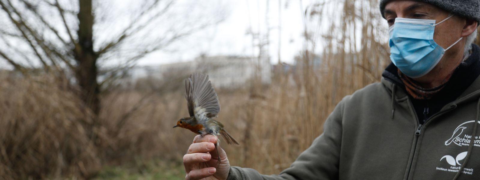 In dem Naturschutzgebiet sind viele Vögel zu Hause.