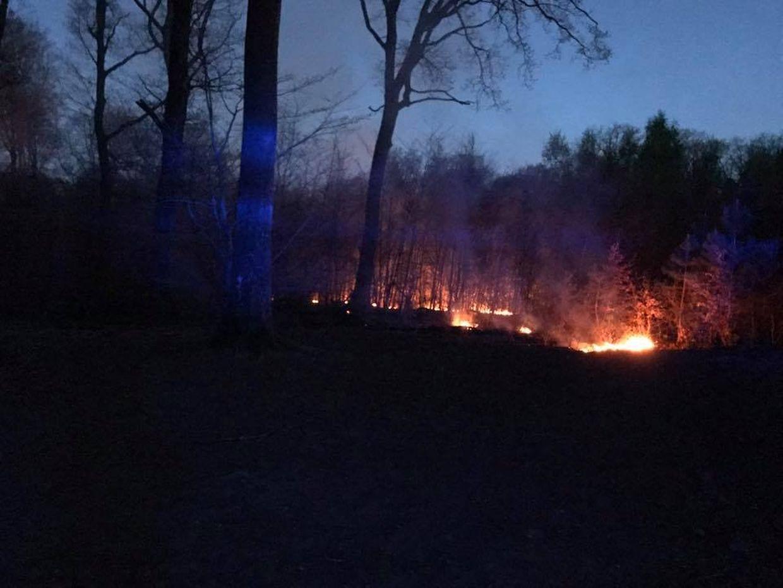 Mehrere hundert Quadratmeter Waldboden standen in Flammen.