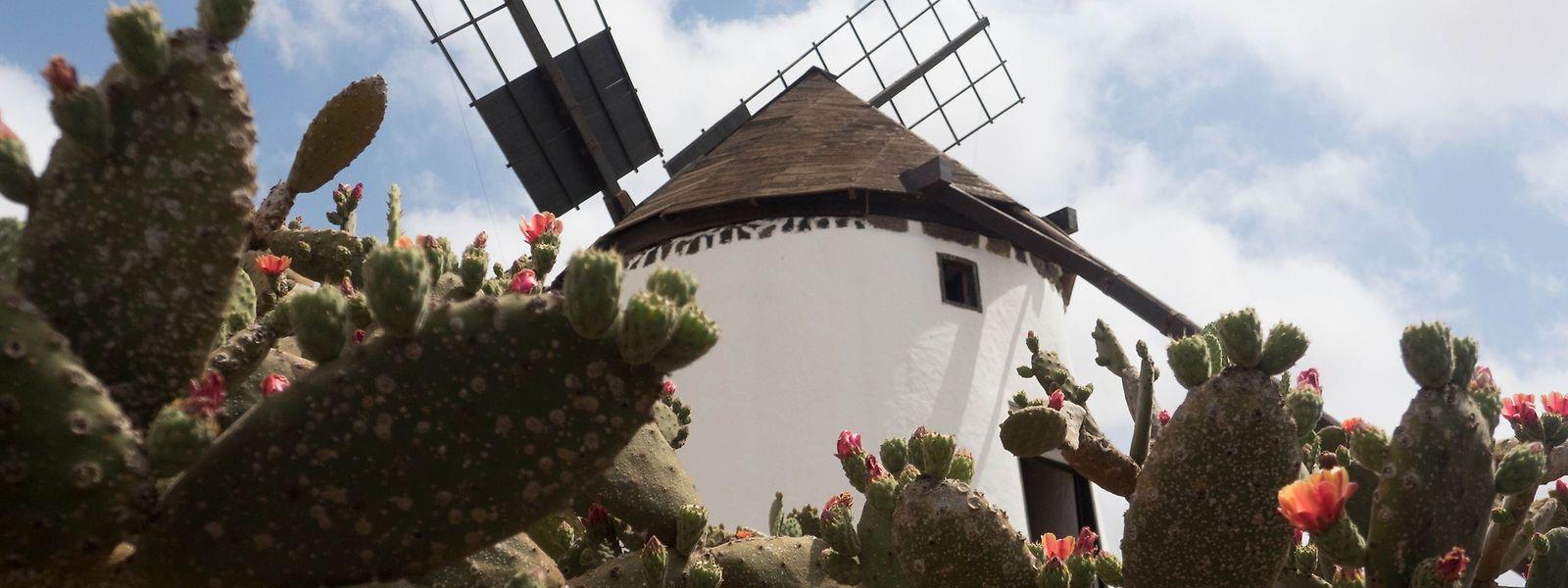 Für Ziegenkäseliebhaber und die, die es werden wollen: das Museo del Queso Majorero samt Mühle in Antigua, Fuerteventura.