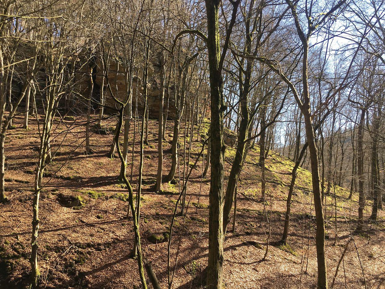 Gleich zu Beginn geht es zunächst steil bergauf in die Wälder.