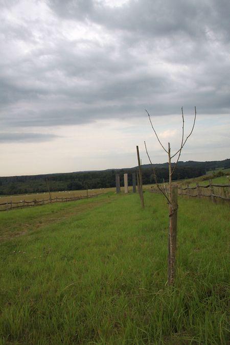 Nur noch wenige Äste erinnern an die gepflanzten Ebereschen. Unter anderem die Wühlmäuse haben dafür gesorgt, dass die Bäume nicht größer wurden.