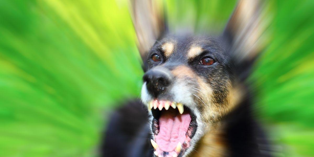 Erst nachdem die Polizisten das Pfefferspray benutzen wollten, um den Hund zu stoppen, pfiff die Hundebesitzerin das Tier zurück.