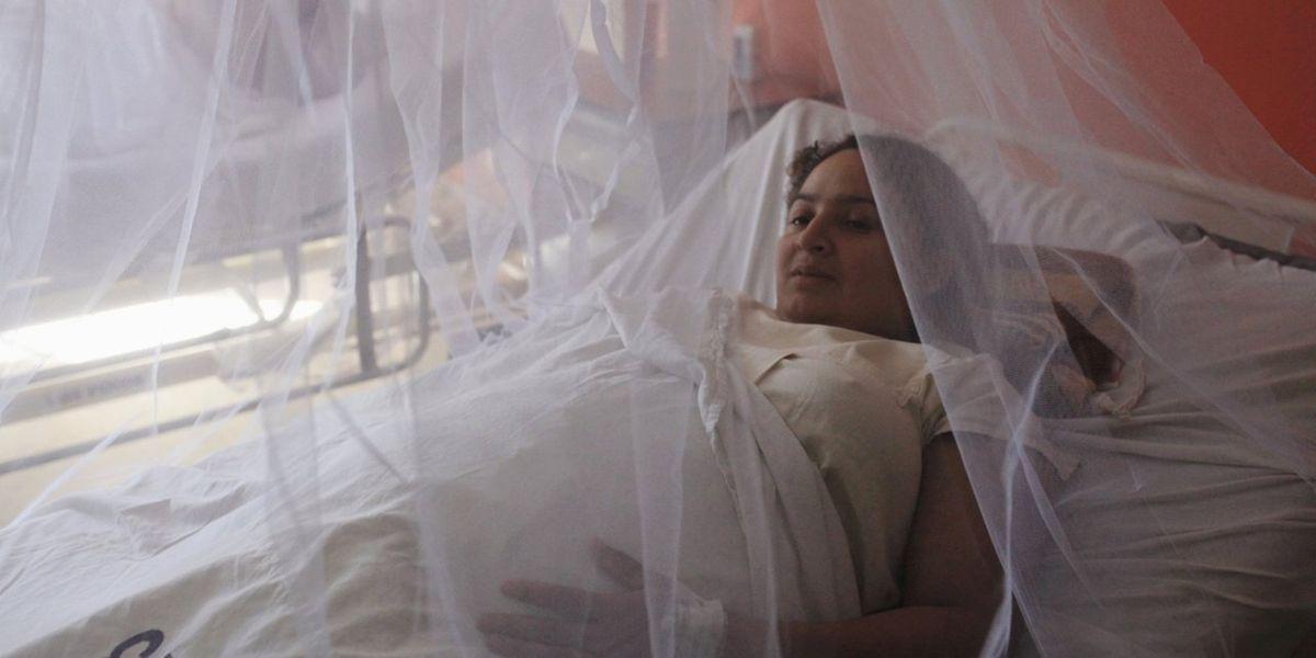 Les femmes enceintes sont plus vulnérables le virus Zika pourrait être responsable d'une microcéphalie, c'est-à-dire de malformations du système nerveux central de l'embryon.