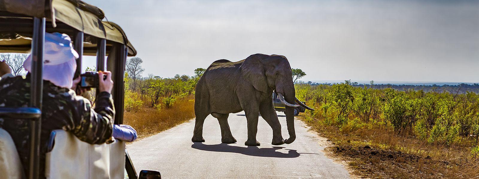 Da derzeit kaum Touristen nach Südafrika reisen, können Safaris in der bisherigen Form nicht stattfinden. Die Alternative sind Liveübertragungen mit Expertenkommentar.
