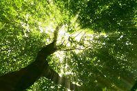 Das Naturschutz aus dem Jahr 2004 wird von Grund auf reformiert.