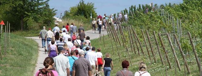 Vom Trend zum Wandern und Radfahren können auch die Gemeinden abseits des Moseltals profitieren, heißt es von dem 2011 gegründeten Tourismusverband ORT Miselerland.