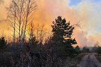 """This picture taken on April 5, 2020, shows a forest fire burning at a 30-kilometer (19-mile) Chernobyl exclusion zone, not far from the nuclear power plant. - Ukrainian authorities on April 5 reported a spike in radiation levels in the restricted zone around Chernobyl, scene of the world's worst nuclear accident, caused by a forest fire. """"There is bad news - radiation is above normal in the fire's center,"""" Yegor Firsov, head of Ukraine's state ecological inspection service, said on Facebook. (Photo by Yaroslav EMELIANENKO / AFP)"""