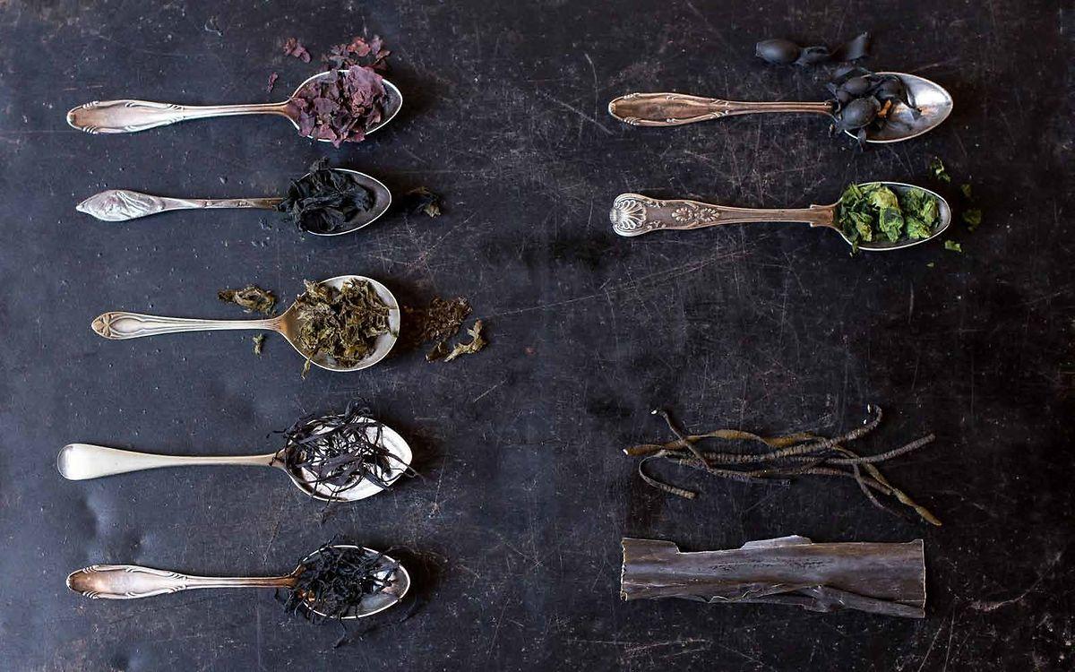 Kleines Algen-Einmaleins von Lisette Kreischer:Von links oben nach rechts unten: Dulse, Wakame, Nori, Arame, Hijiki, Knotentang, Meersalat, Meeresspaghetti und Kombu.