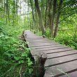 Naturschutzgebiete sollen helfen, die Biodiversität zu erhalten.