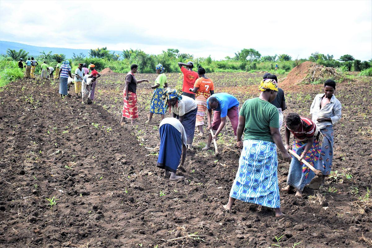 In der Maison Shalom in Ruanda laufen auch während Corona landwirtschaftliche Anbaumaßnahmen.
