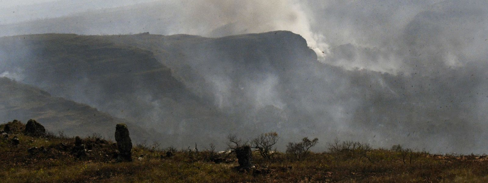 Nach Einschätzung von Umweltschützern haben Farmer die jüngsten Brände im Amazonasgebiet gelegt, um neue Weideflächen für ihre Viehherden oder Felder für den Sojaanbau zu schaffen.