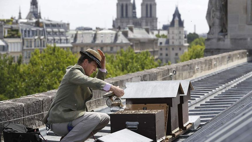 (FILES) This file photograph taken on June 16, 2017, shows French beekeeper Audric de Campeau as he checks beehives set on the roof of the Monnaie de Paris in Paris, with Notre-Dame Cathedral in the background.  To check the beehives he has set up on the roof of the sprawling Monnaie de Paris on the banks of the River Seine, Audric de Campeau slips on a harness over tan-coloured trousers. / AFP PHOTO / PATRICK KOVARIK