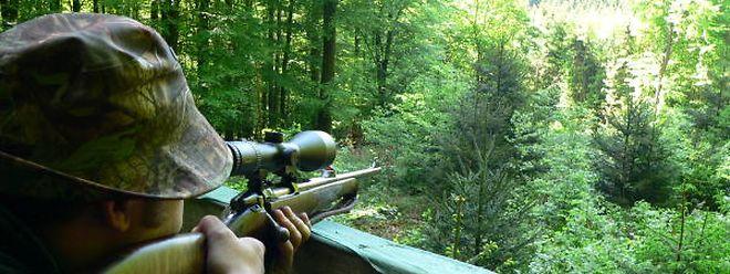 Jäger auf der Lauer:Die Petition 483 richtet sich gegen das Jagdverbot für Füchse.