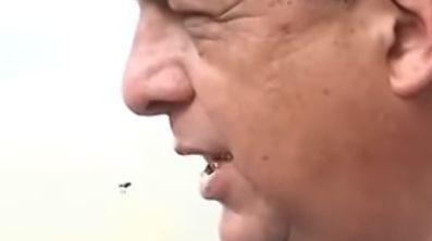 Die letzten Sekunden der Wespe wurden auf Video gebannt.
