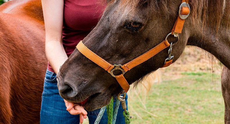 Hier eine Karotte, da ein Stück Apfel: Auch wenn Spaziergänger es gut meinen, wenn sie Pferde und Kühe am Wegesrand füttern, sollten sie es lassen. Es könnte den Tieren schaden.
