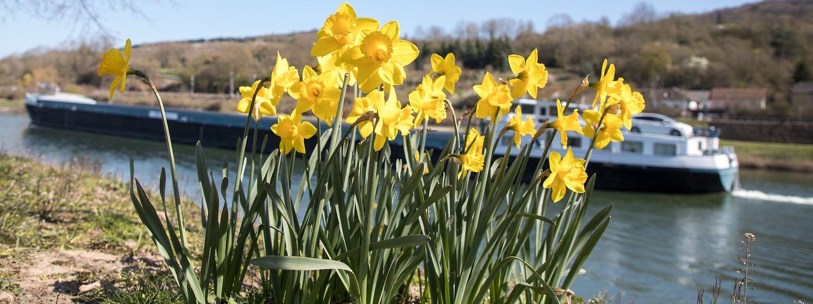 Milde Temperaturen und viel Sonne lassen die Natur derzeit aufblühen.