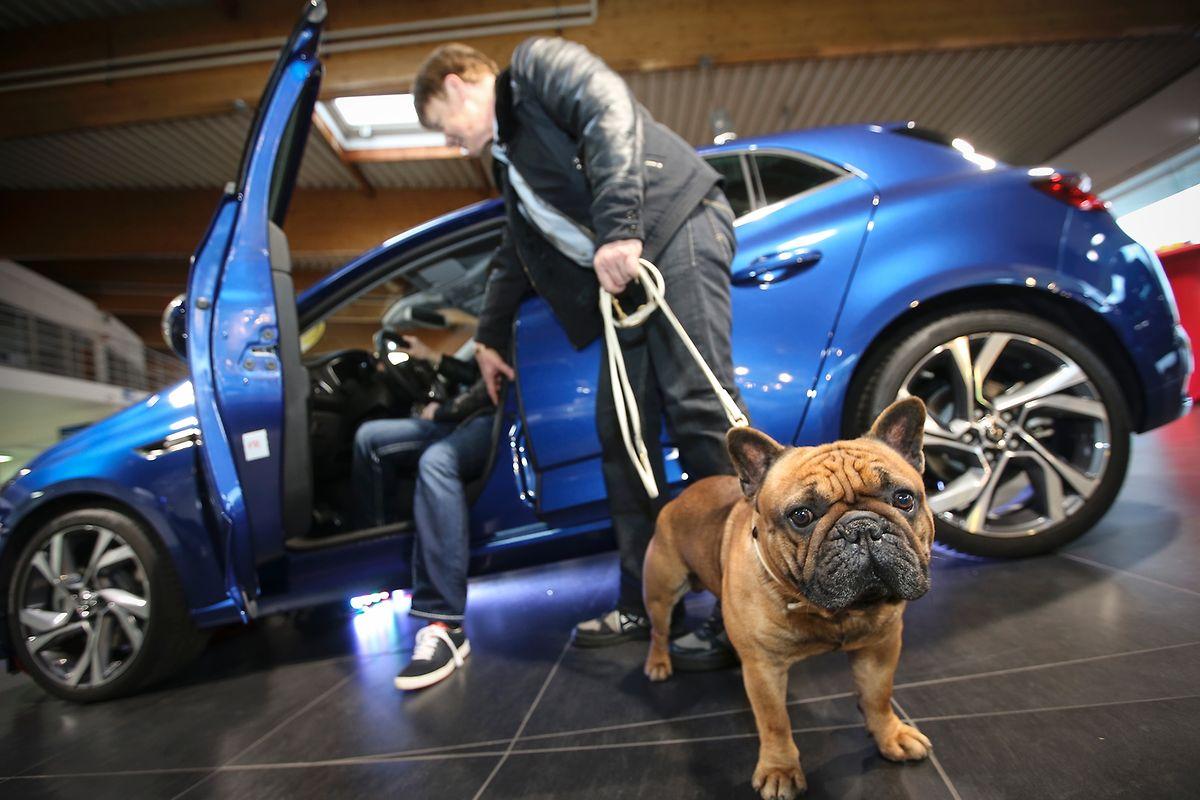 Autofestival 2016 autos zum anfassen und probefahren - Garage huberty lamouline ...